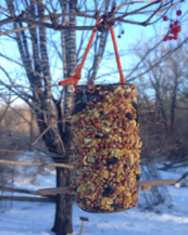 bird feeder.png